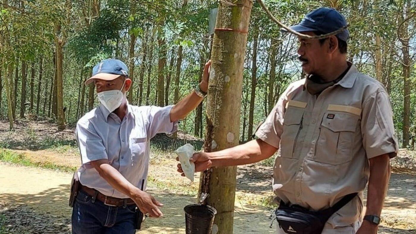 Soutenir les exploitants de plantations d'hévéas indonésiens travaillant avec Porsche et Michelin